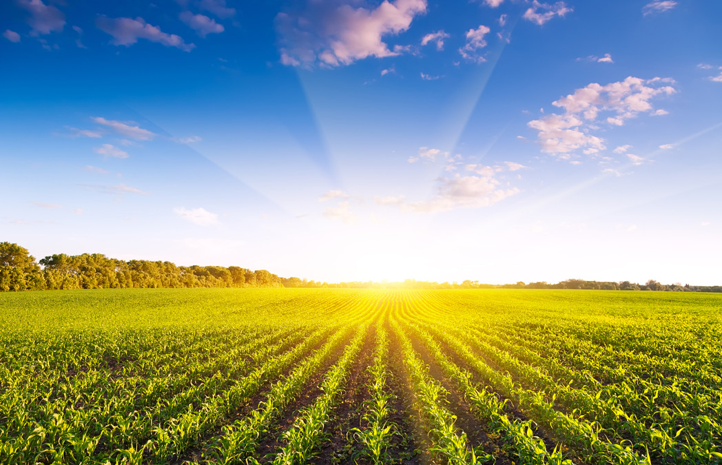 Tax Relief for the Leasing of Farm Land